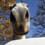 travel-slovenia-avtohtoni-konji-view