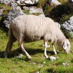 travel-slovenia-ovca-view
