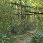travel-slovenia-gozdovi