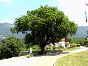 Vstopna točka v vasi Kamnje