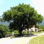 travel-slovenia-po-starodavnih-poteh-pod-cavnom-view
