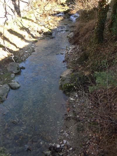 Potok Vrtovinšček na robu gozda