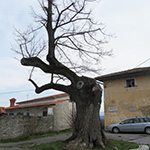 travel-slovenia-pliskovica-stara-lipa-view