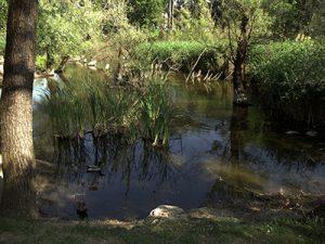 Vodno področje parka