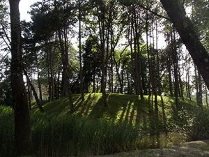 Drevesa na manjšem hribčku na sredini parka